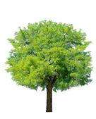 árbol idílico — Foto de Stock