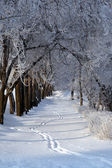 El camino de invierno. — Foto de Stock