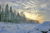 Winter birch forest — Stock Photo