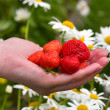 Hand with strawberries — Stock Photo