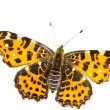 Stock Photo: Isolated map butterfly