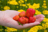 Strawberries and flowers — Stock Photo