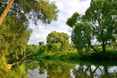 Reflection in river — Stock Photo