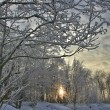 Snow winter sunset — Stock Photo