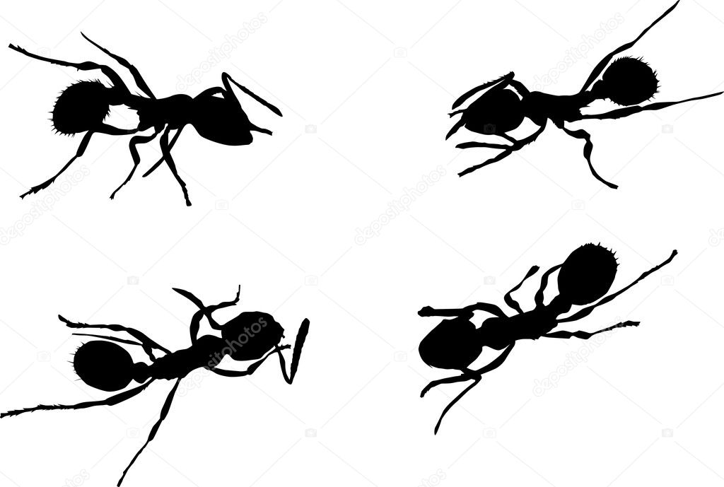 Illustration with ant silhouettes isolated on white background — Stock Vector #1739594