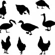 Farm bird silhouettes — Stockvectorbeeld