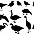 Royalty-Free Stock Vector Image: Twelve bird silhouettes