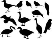 Twelve bird silhouettes — Stock Vector