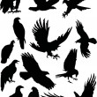 Thirteen eagle silhouettes — Stock Vector