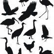 Royalty-Free Stock Vector Image: Birds collection