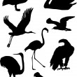 Royalty-Free Stock Vector Image: Bird silhouettes collection