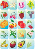 Flowers and fruits icons — Stock Vector