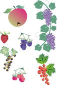 Berry collection — Stock Vector
