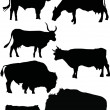 Buffalo and cow silhouettes — Stock Vector #1838888