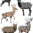 Illustration with deers — Stock Vector #1839430
