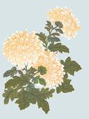 Yellow chrysanthemum illustration — Stock Vector