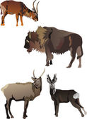 Horned animals collection — Stock Vector
