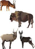长角的动物集合 — 图库矢量图片