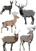 Illustration with deers — Stock Vector