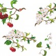 Royalty-Free Stock Vector Image: Ripe cherry and flowers