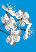 ブルーに桜の木の花 — ストックベクタ