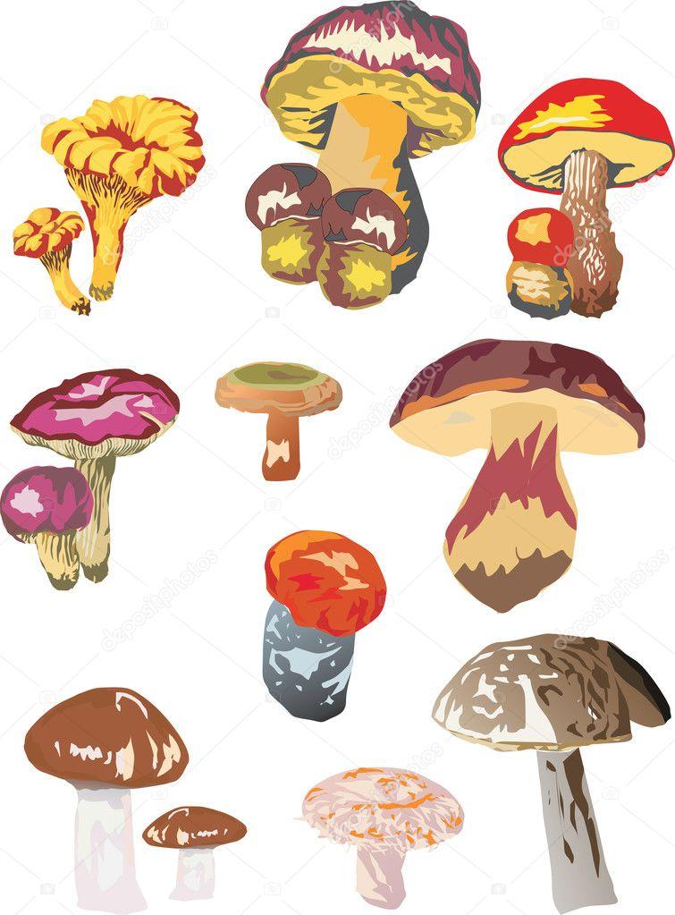 картинки грибов разного размера