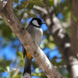Stock Photo: Bird on a tree