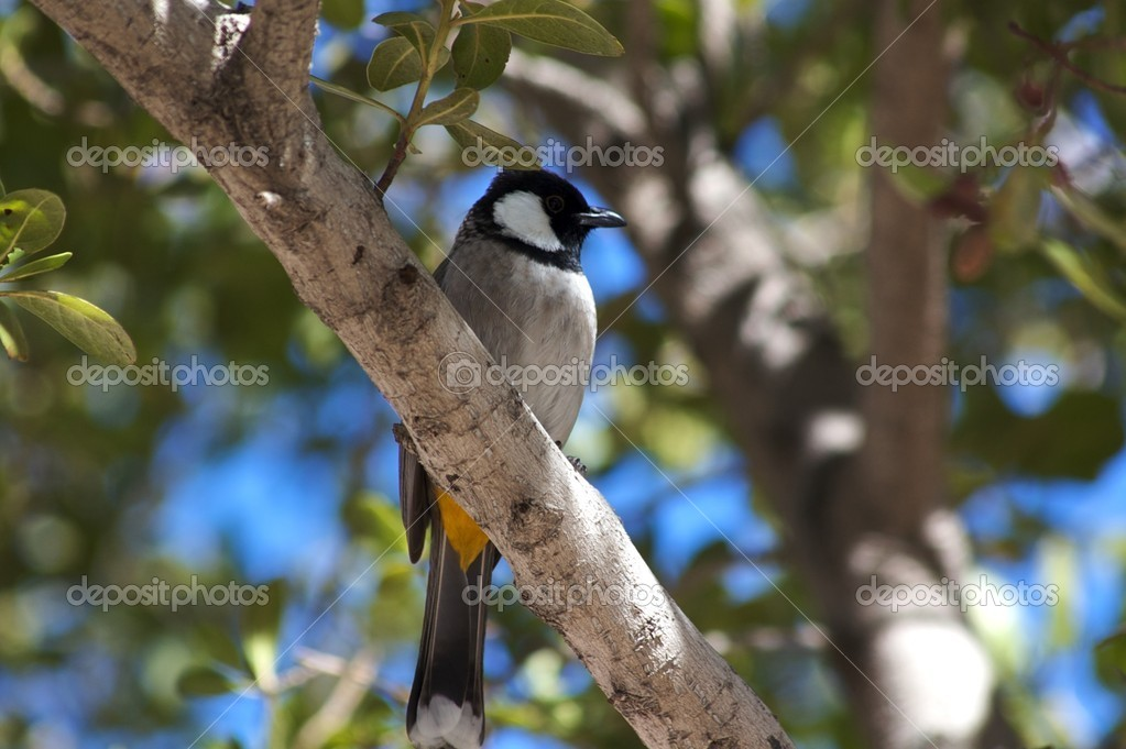 Bird on a tree — Stock Photo #1644812