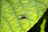 Leaf and fly — Stock Photo
