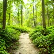 Stock Photo: Way in forest