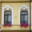Two windows with flower registration — Stock Photo