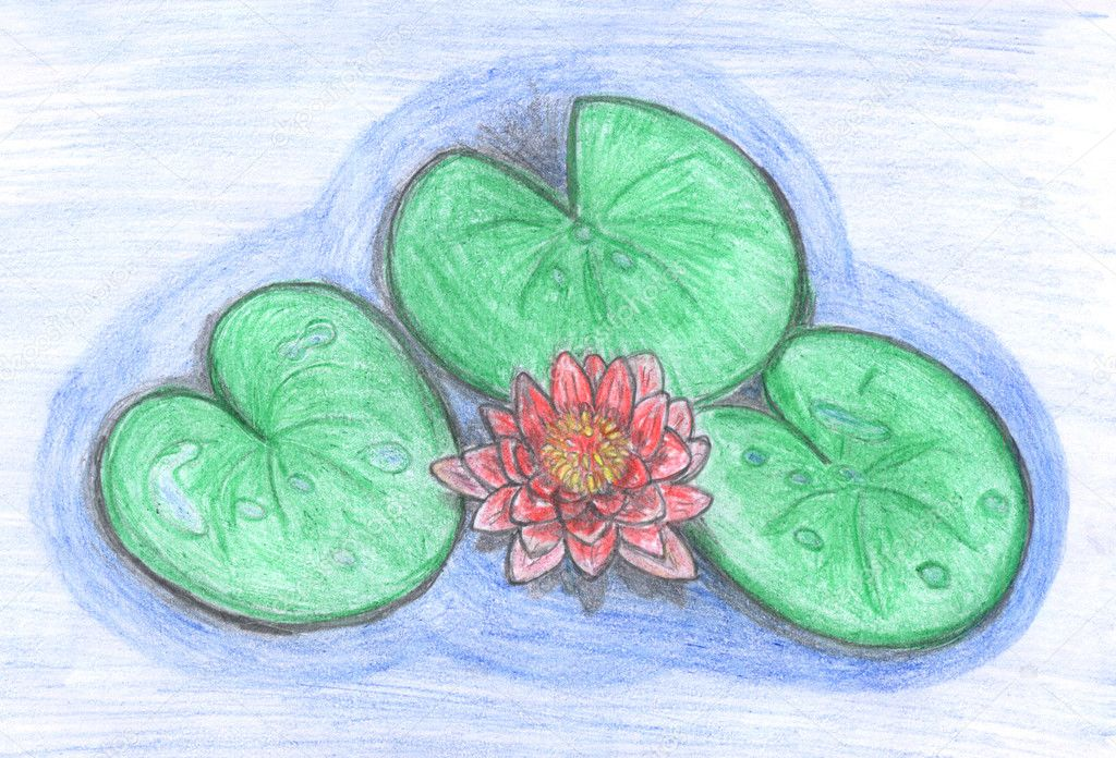 Beautiful lotus flower in water colored drawing