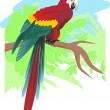 Parrot - Stock Vector