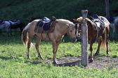 Horse on a leash — Стоковое фото