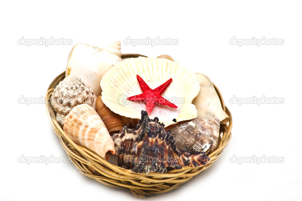 Different type sea shells — Stock Photo #1647157