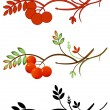 Stock Vector: Autumnal rowan twig