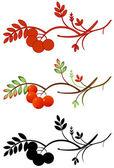 Jarzębiny jesiennych gałązka — Wektor stockowy