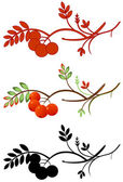 Podzimní rowan větvička — Stock vektor
