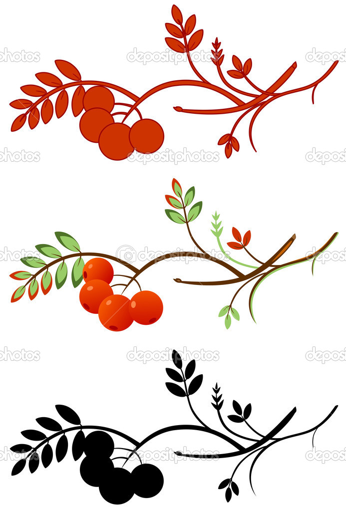 Vector illustration of a rowan twig wiht ashberry in three various color — Stock Vector #1659788
