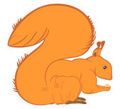 Squirrel — Stock Vector