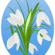 Stock Vector: Snowdrop