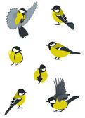 Set of Birds — Stock Vector