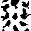 Коллекция очертания птиц — Cтоковый вектор