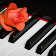 Red flower on piano — Stock Photo