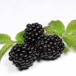Royalty-Free Stock Photo: Blackberries