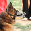 Stock Photo: Police-dog