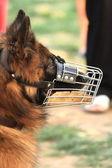 Police-dog — Stock Photo