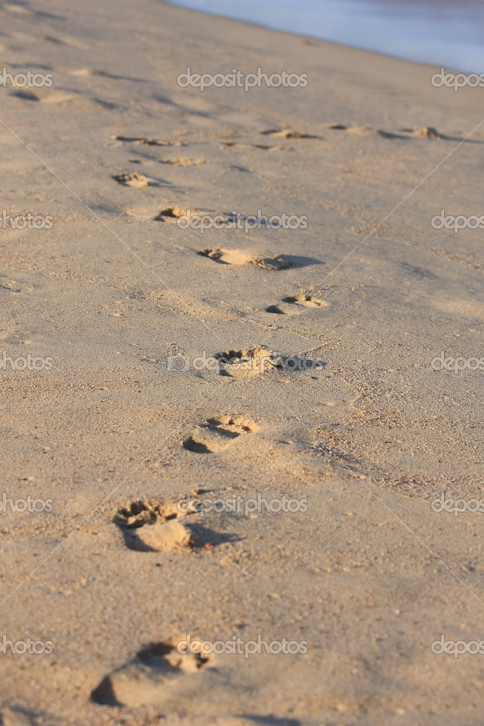 Human footprints in the descending sunlight — Stock Photo #1969084