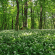 Green forest — Stock Photo #2076037