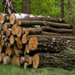 Stock Photo: Pile of logs in the forest